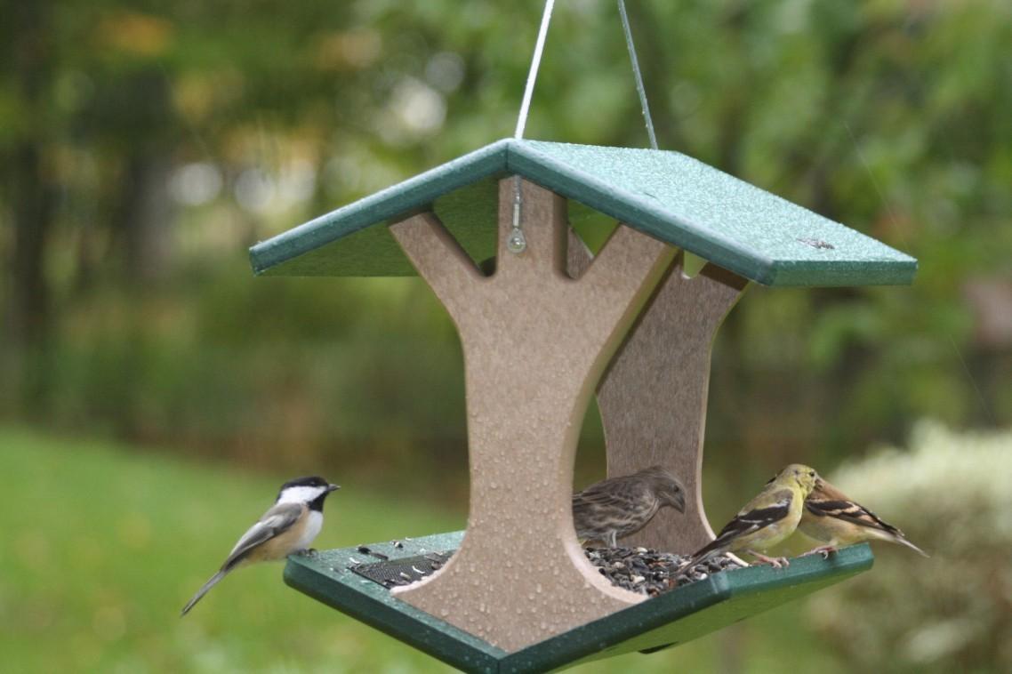 Картинки по запросу Заготовка кормушек для зимующих видов птиц